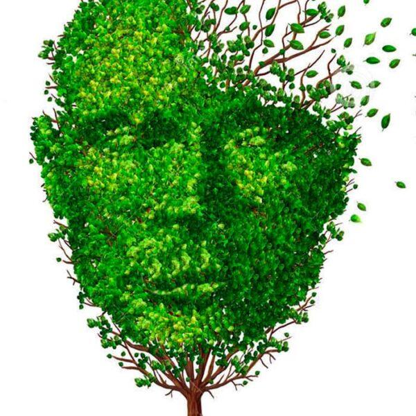 Психиатрическая помощь при деменциях (болезни Альцгеймера, сосудистой деменции, смешанной деменции